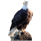Bald Eagle-Lifesized Standup